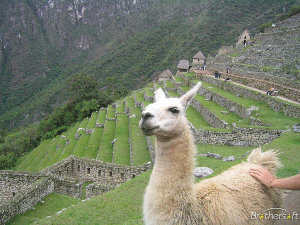 Gow has developed a near sexual fascination with Llama's, I think I may need to get him some help!